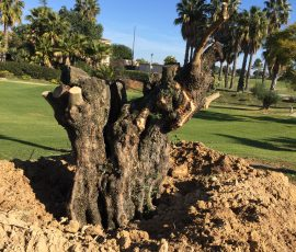 reforestación campo golf zaudin